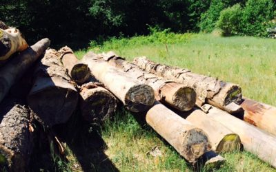 Logs End River Reclaimed Yellow Birch Flooring